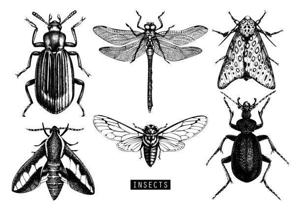 vector insects collection - bugs stock illustrations