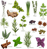 Spices and herbs vector isolated icons set of lavender, oregano or ginger root and thyme or chives, organic seasonings of parsley, dill or black pepper and sage or cinnamon and farm peppermint