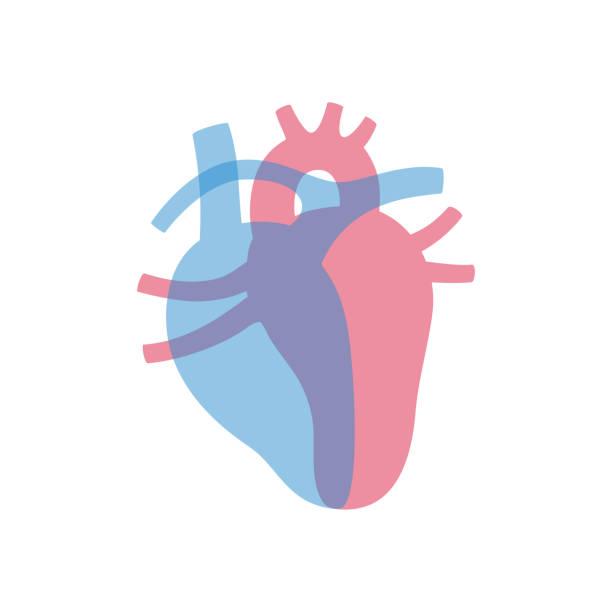 向量孤立的心臟例證 - 人體部分 幅插畫檔、美工圖案、卡通及圖標