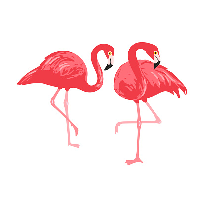 Vector isolated pink flamingos pair. Hand Drawn illustration