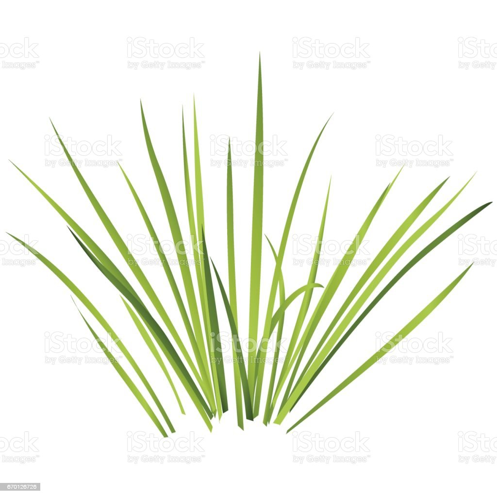 Vector isolated reed. Water plants in different variants, white background. vector art illustration
