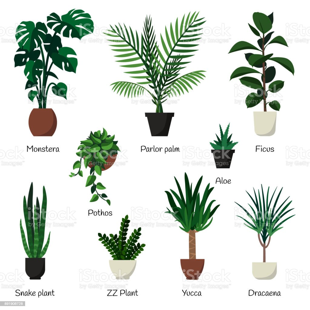 Vector Isolated Set Various Indoor Ornamental Plants With ... on moon phases names, looney tunes characters names, weapon names,