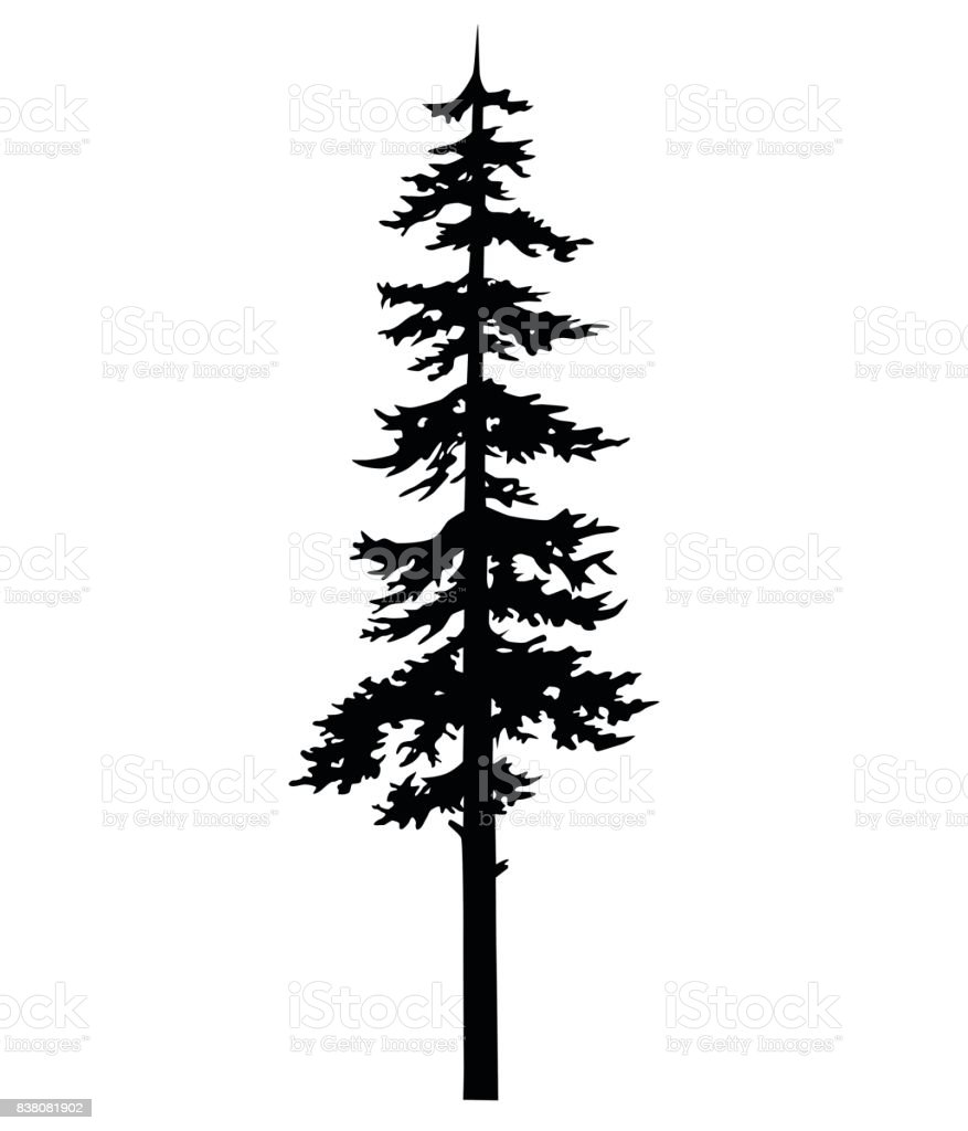 Vector Isolated Silhouette Of A Coniferous Tree Can Be ...