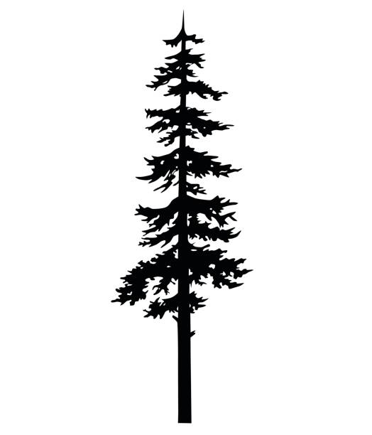 Vector isolated silhouette of a coniferous tree. Can be used in design, illustration, tattoo. Vector isolated silhouette of a coniferous tree. pine tree stock illustrations