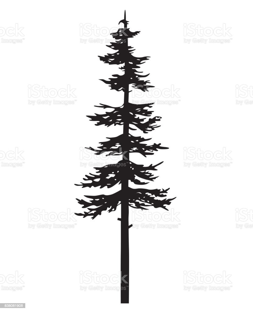 89a03a64f Vector isolated silhouette of a coniferous tree. Can be used in design,  illustration,