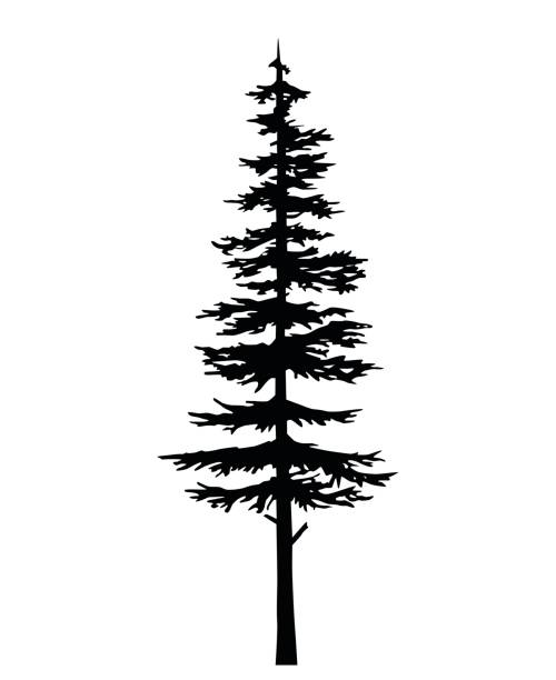 Best Pine Tree Illustrations, Royalty-Free Vector Graphics ...