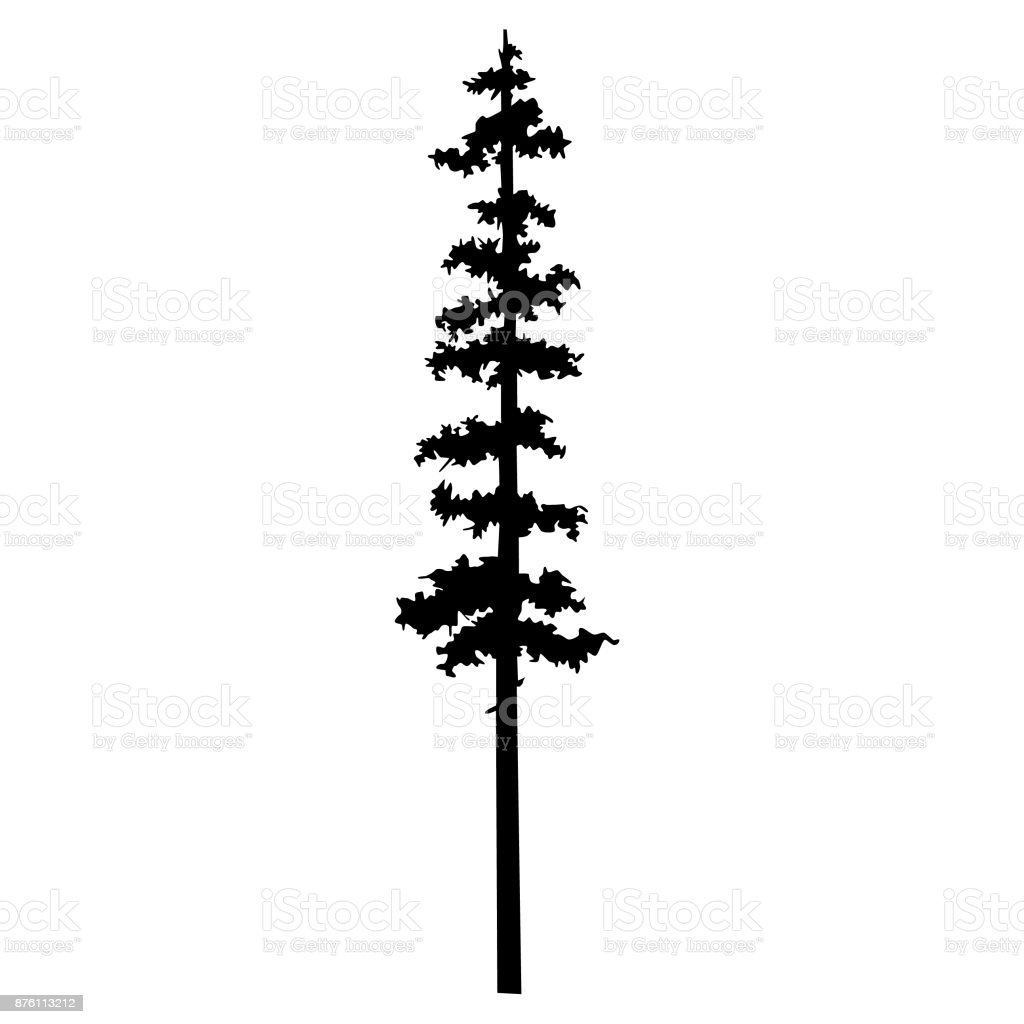 Vector Isolated Silhouette Of A Coniferous Tree Can Be Used In