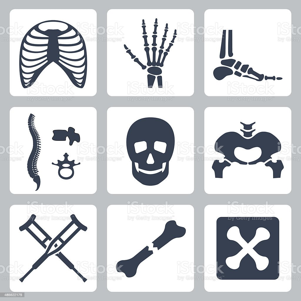 Vector isolated skeleton icons set vector art illustration