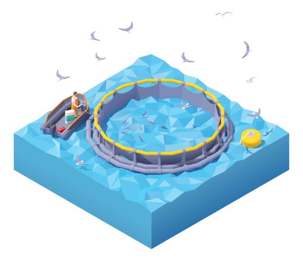 ilustrações de stock, clip art, desenhos animados e ícones de vector isometric feeding fish at fish farm - aquacultura