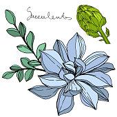 Vector Jungle botanical succulent flower. Wild spring leaf isolated. Engraved ink art illustration. Isolated succulents illustration element.