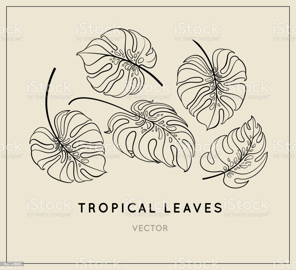 vector jungle leaves set tropical plant leaf vintage style
