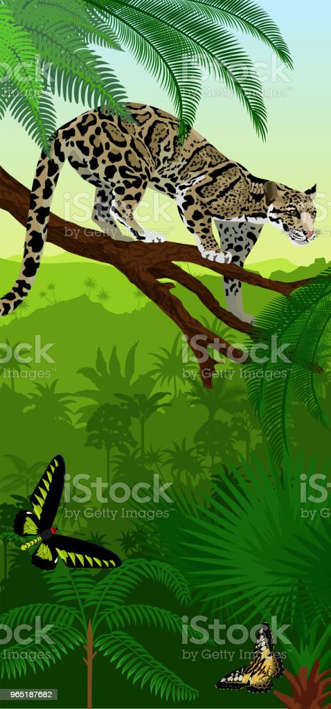 Vector Jungle rainforest vertical baner with clouded leopard (neofelis nebulosa) and trogonoptera birdwings butterflies vector jungle rainforest vertical baner with clouded leopard and trogonoptera birdwings butterflies - stockowe grafiki wektorowe i więcej obrazów azja royalty-free