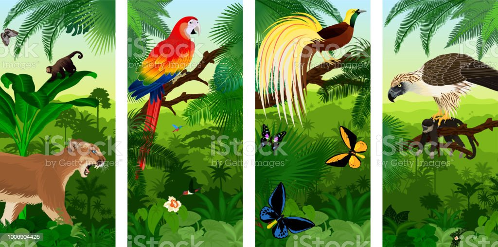 Vector Jungle rainforest vertical baner with  Lesser Bird of Paradisea,puma cougart,  parrot red scarlet macaw arae , hummingbirds, birdwing butterflies and  philippine Eagle with monkey vector art illustration