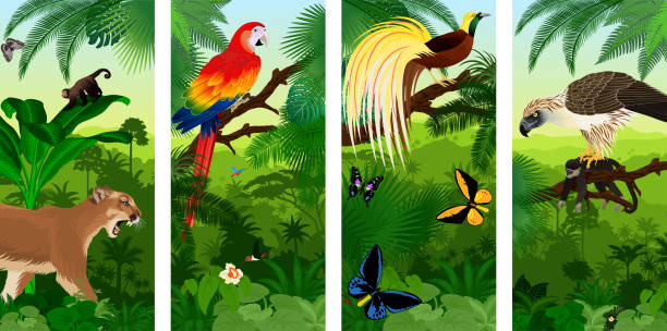 Vector Jungle rainforest vertical baner with  Lesser Bird of Paradisea,puma cougart,  parrot red scarlet macaw arae , hummingbirds, birdwing butterflies and  philippine Eagle with monkey Vector Jungle rainforest vertical baner with  Lesser Bird of Paradisea,puma cougart,  parrot red scarlet macaw arae , hummingbirds, birdwing butterflies and  philippine Eagle with monkey amazon stock illustrations