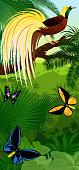 Vector Jungle rainforest vertical baner with  Lesser Bird of Paradise with birdwing butterflies