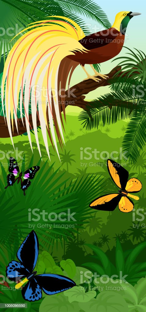 Vector Jungle rainforest vertical baner with  Lesser Bird of Paradise with birdwing butterflies vector art illustration