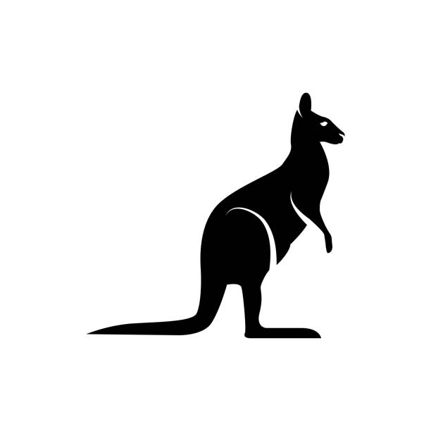 Vector kangaroo silhouette view side for retro icons, emblems, badges, labels template vintage design element. Isolated on white background Vector kangaroo silhouette view side for retro icons, emblems, badges, labels template vintage design element. Isolated on white background kangaroo stock illustrations