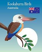Vector Kookaburra Birds
