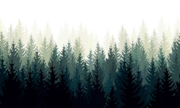 Vector landscape with green silhouettes of coniferous trees in the mist Vector landscape with green silhouettes of coniferous trees in the mist. woodland stock illustrations
