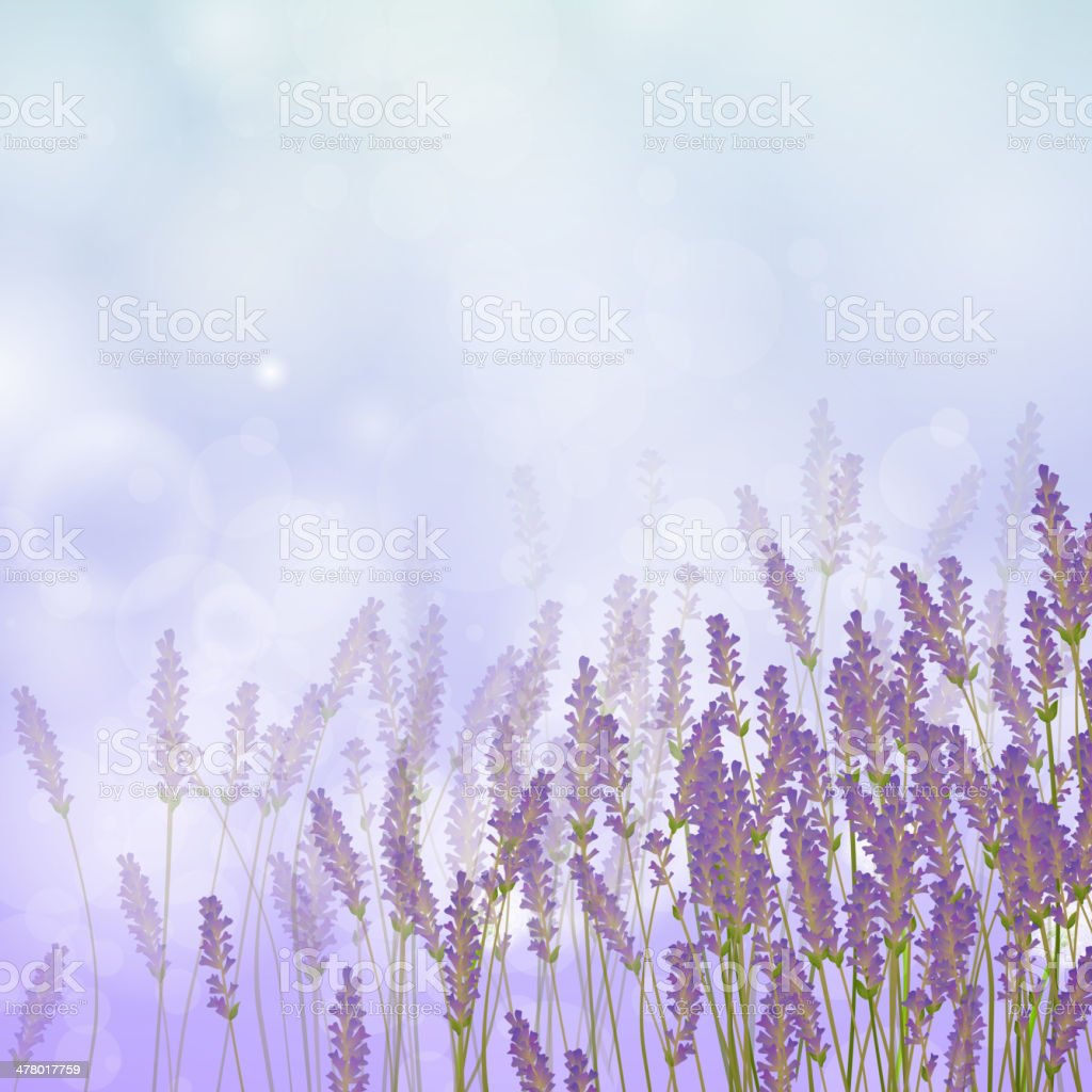 Vector Lavender Background vector art illustration