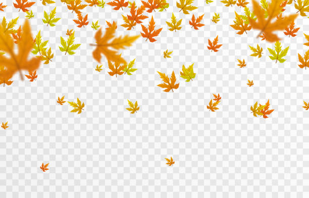 Vector leaf fall on an isolated transparent background. Autumn, the leaves are falling from the trees. Leaves png. Vector leaf fall on an isolated transparent background. Autumn, the leaves are falling from the trees. Leaves png. Vector. fall leaves stock illustrations