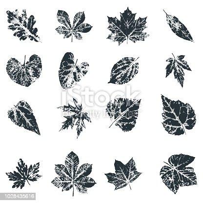 istock Vector Leaf print. Inkprinted leaves of the trees on paper 1028435616