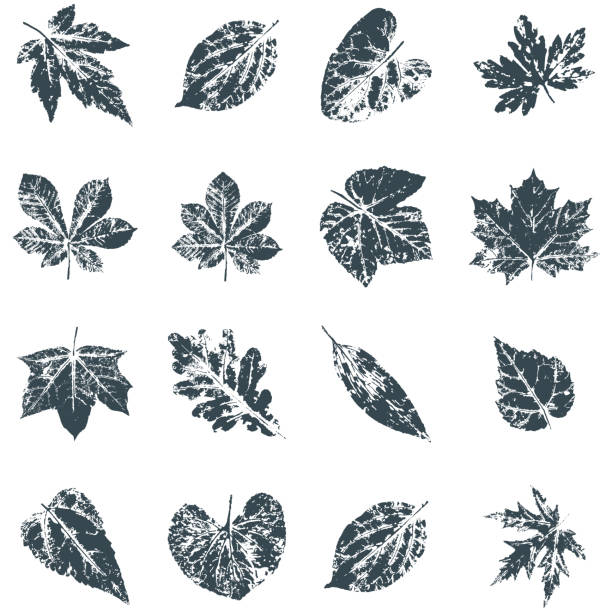 Vector Leaf print. Inkprinted leaves of the trees on paper vector art illustration