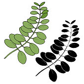Vector Leaves branch. Exotic tropical hawaiian summer. Leaf plant botanical floral foliage. Black and white engraved ink art. Isolated branches illustration element.