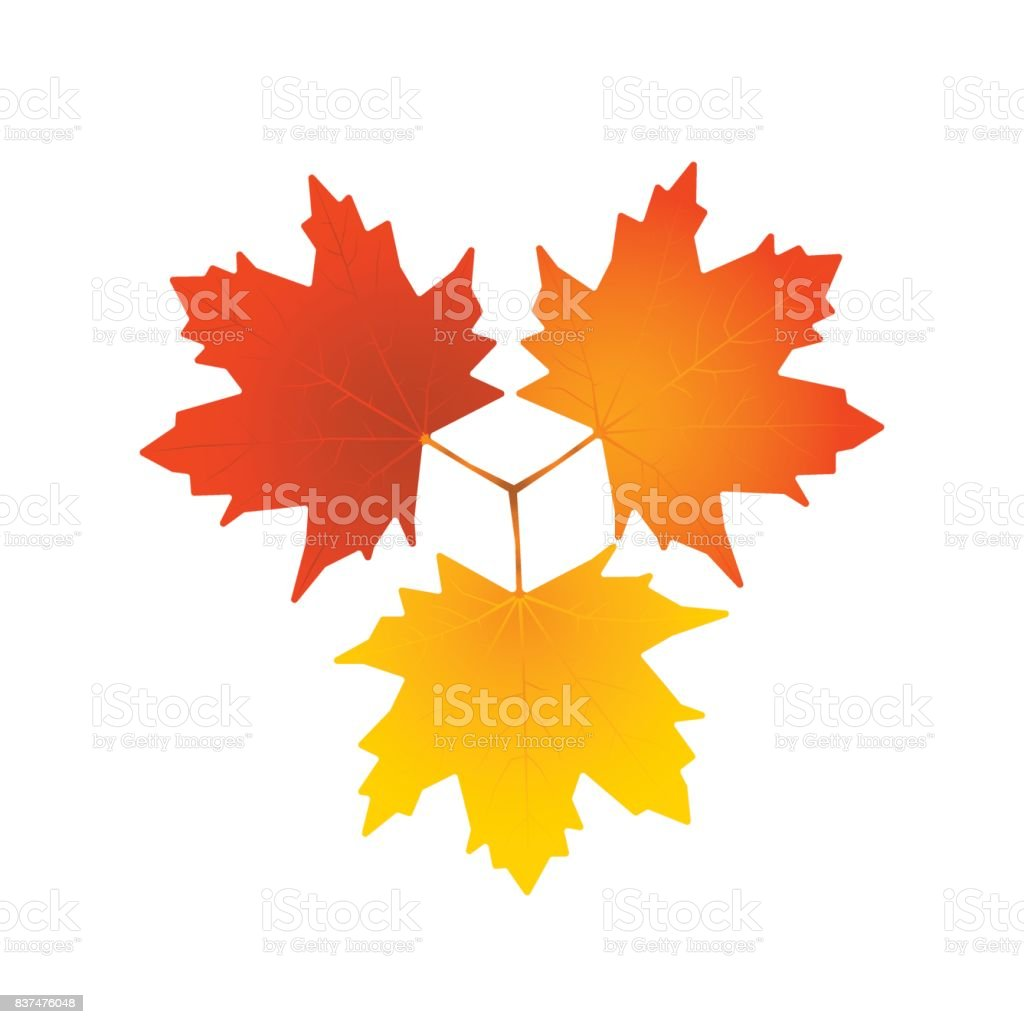 Vector leaves isolated on white background