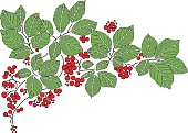 Vector leaves with red berries