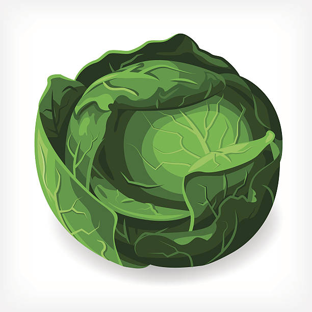 Vector Lettuce A vectored lettuce illustration. EPS 10 file, layered & grouped, with meshes and transparencies (shadows & overall effects only). butterhead lettuce stock illustrations