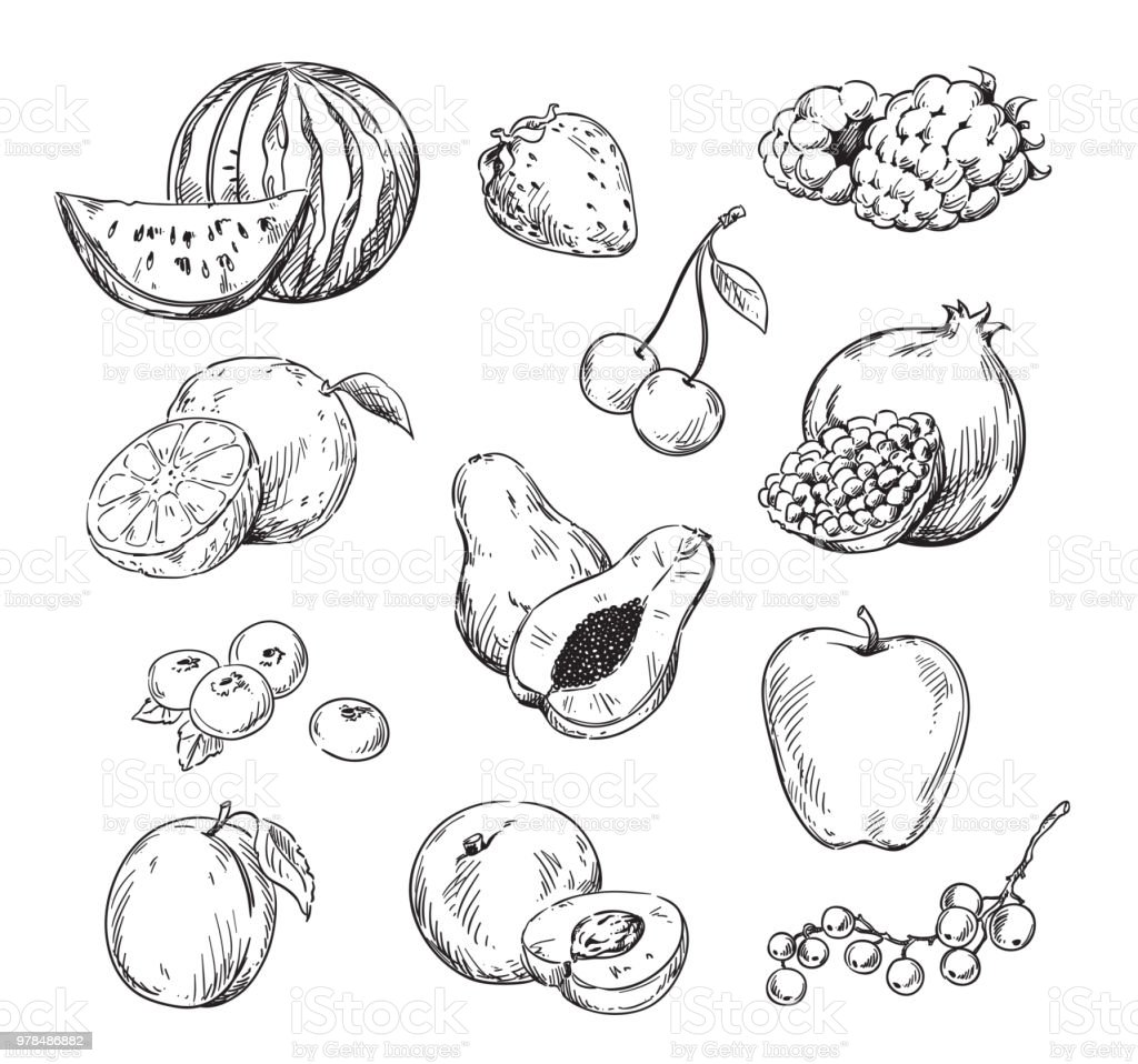 Vector line drawing of various fruits vector art illustration