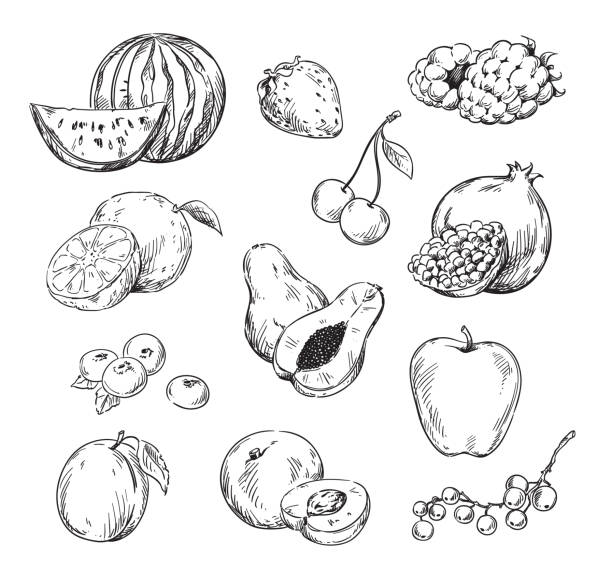 Vector line drawing of various fruits Vector line drawing of various fruits cherry stock illustrations