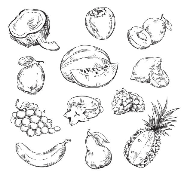 Vector line drawing of various fruits Vector line drawing of various fruits banana drawings stock illustrations