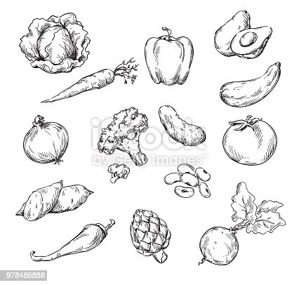 Vector line drawing of various vegetables