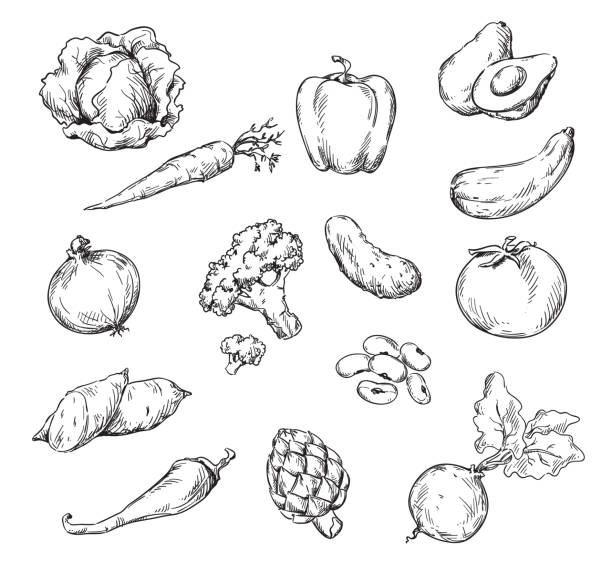 Vector line drawing of various vegetables Vector line drawing of various vegetables avocado drawings stock illustrations