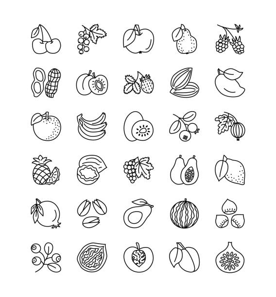 Vector line icon collection. Fruits, berries and nuts. Healthy vegetarian food. Apple, cherry, pineapple, grape, hazelnut, peanut; strawberry, raspberry. Vector line icon set. Fruits, berries and nuts. Healthy vegetarian food. Apple, cherry, orange, lemon, walnut, hazelnut, avocado, pineapple, strawberry, raspberry, blueberry. Isolated on white background. avocado borders stock illustrations