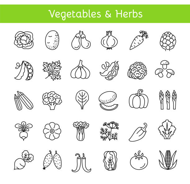 Vector line icons with vegetables and herbs. Healthy lifestyle. Vegan & vegetarian food. Different kinds of veggies. Isolated on white background Vector line icons with vegetables and herbs. Healthy lifestyle. Vegan & vegetarian food. Different kinds of veggies. Isolated objects on white background. squash vegetable stock illustrations