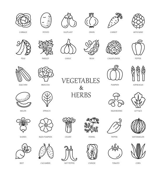 vector line icons with vegetables and herbs. - lettuce stock illustrations