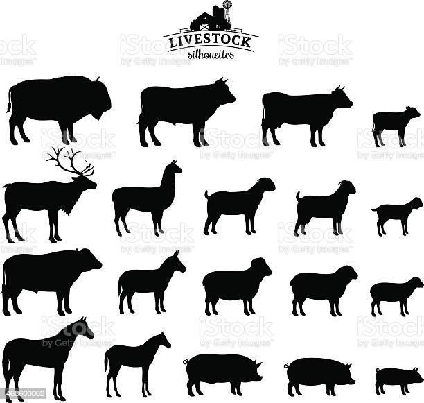 Vector livestock silhouettes isolated on white vector id468600062?b=1&k=6&m=468600062&s=612x612&h=0b zeprroi5ihjlivmvv n4melwiffyxnsyonpyafa8=