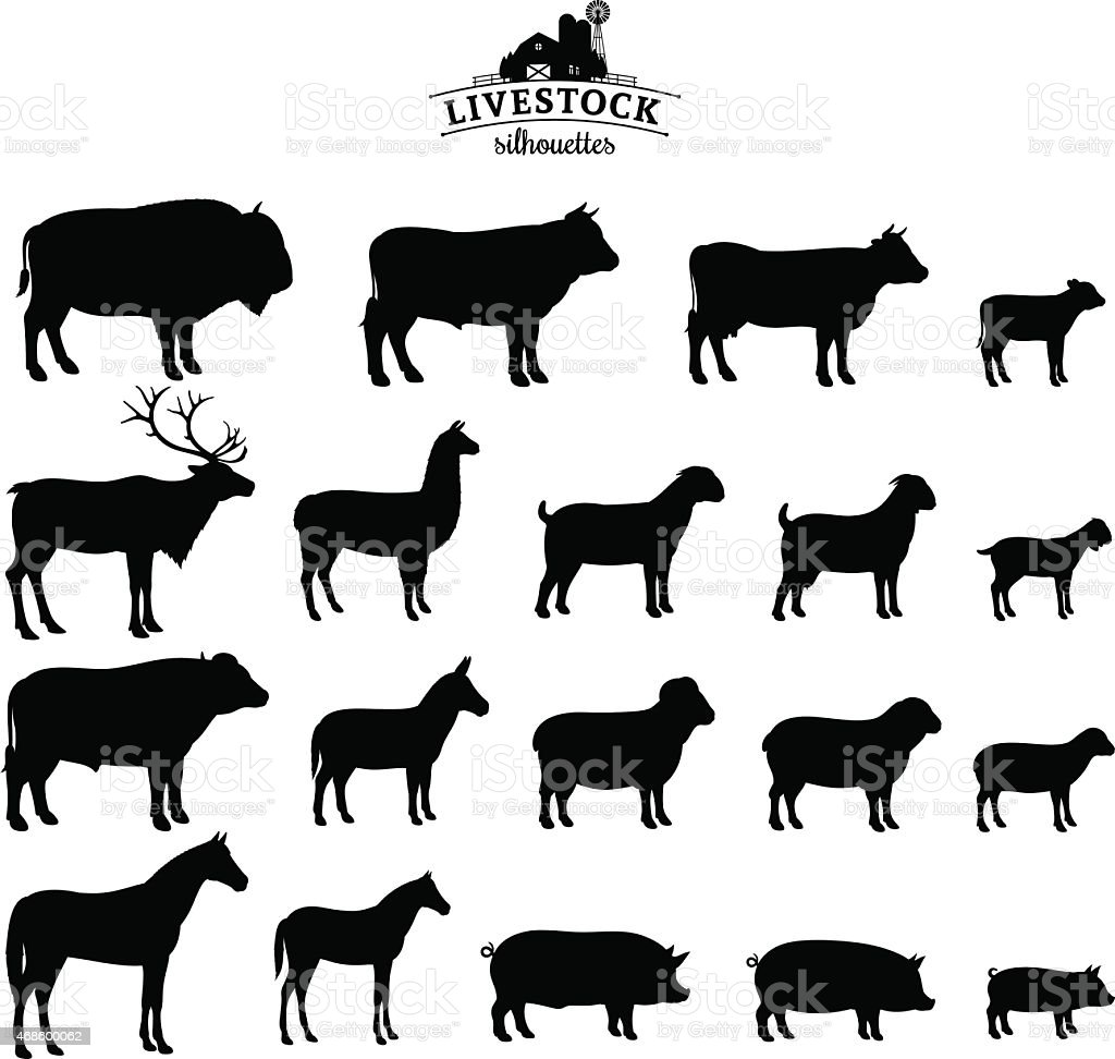 Vector Livestock Silhouettes Isolated on White vector art illustration