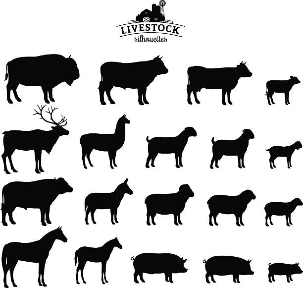 Vector Livestock Silhouettes Isolated on White vector art illustration