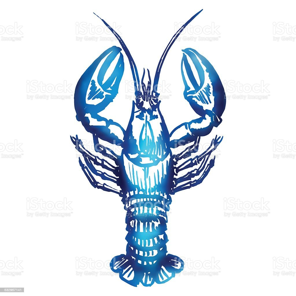 Vector lobster sketch. vector art illustration
