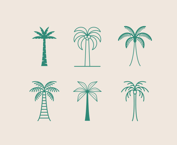 Vector logo design template with palm tree - abstract summer and vacation badge and emblem for holiday rentals, travel services, tropical spa and beauty studios vector art illustration