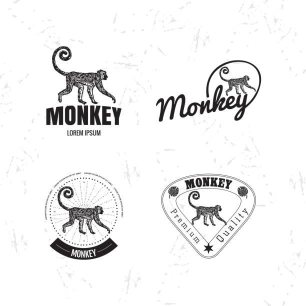 vector logo set with jungle monkey - neuweltaffen und hundsaffen stock-grafiken, -clipart, -cartoons und -symbole