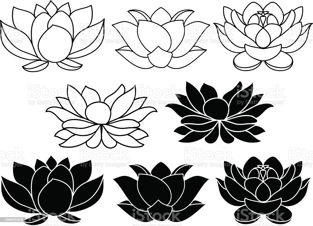 Lotus Flower Line Drawing Vector Free Download : Vector lotus flowers stock art more images of