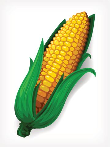 Vector Maize