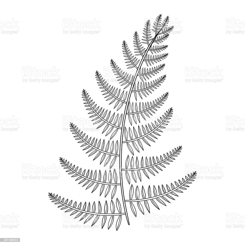 Vector male Fern for tattoo in boho, hipster style. vector art illustration