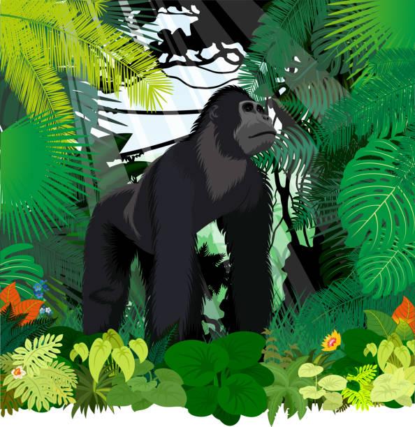 vektor männlichen gorilla im dschungel regenwald - gorilla stock-grafiken, -clipart, -cartoons und -symbole