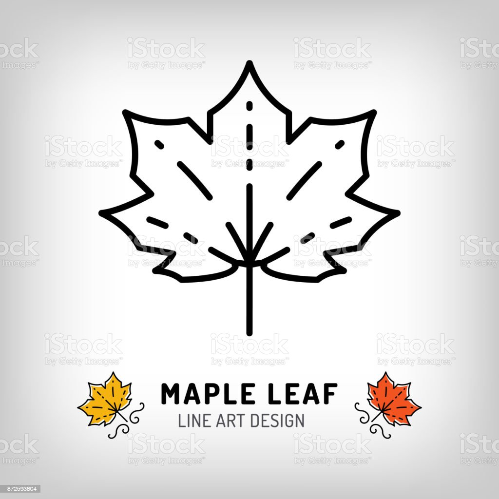 Vector maple leaf icon Autumn leaves Canada symbol. Line design vector art illustration
